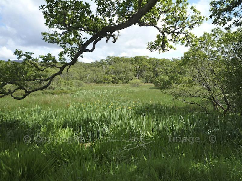 Taynish NNR - marsh