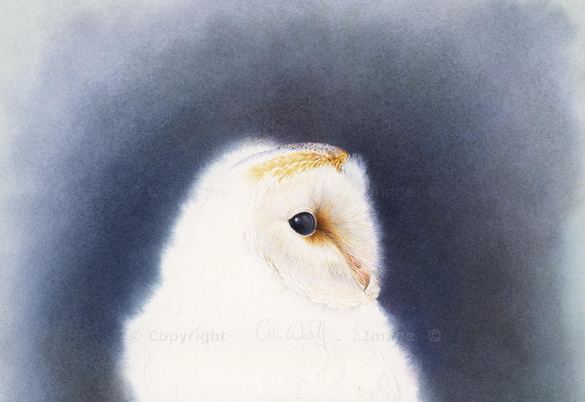Barn Owl head (1)