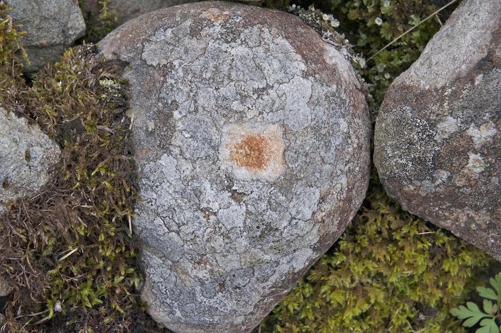 Interesting lichen