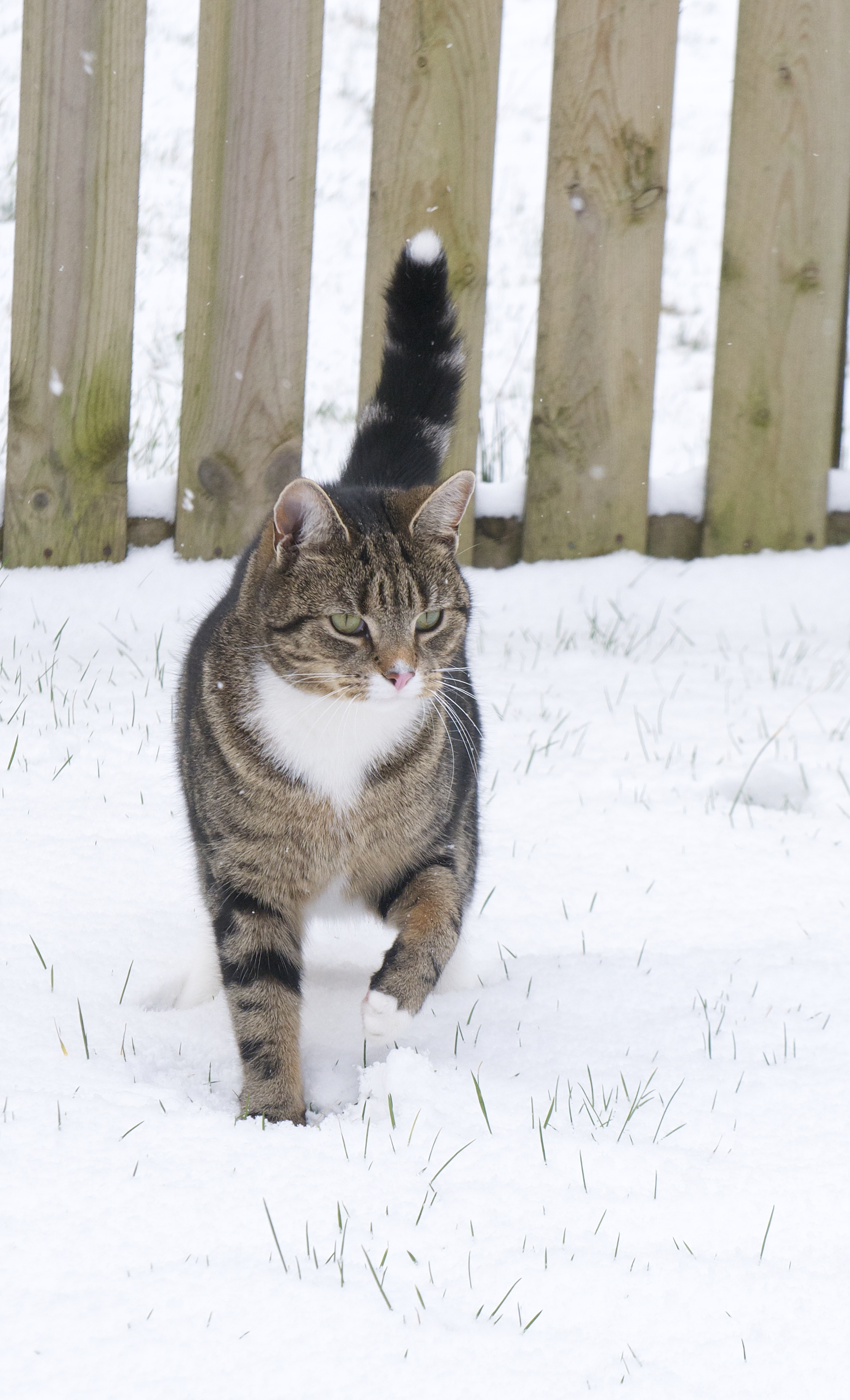 Purdey playing in the snow (March 2013)