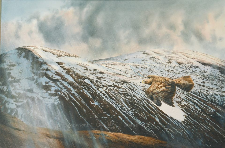 Golden Eagle by Colin Woolf (2)