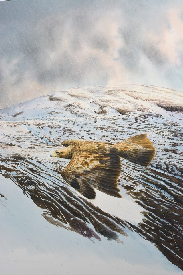 Golden eagle by Colin Woolf (4)