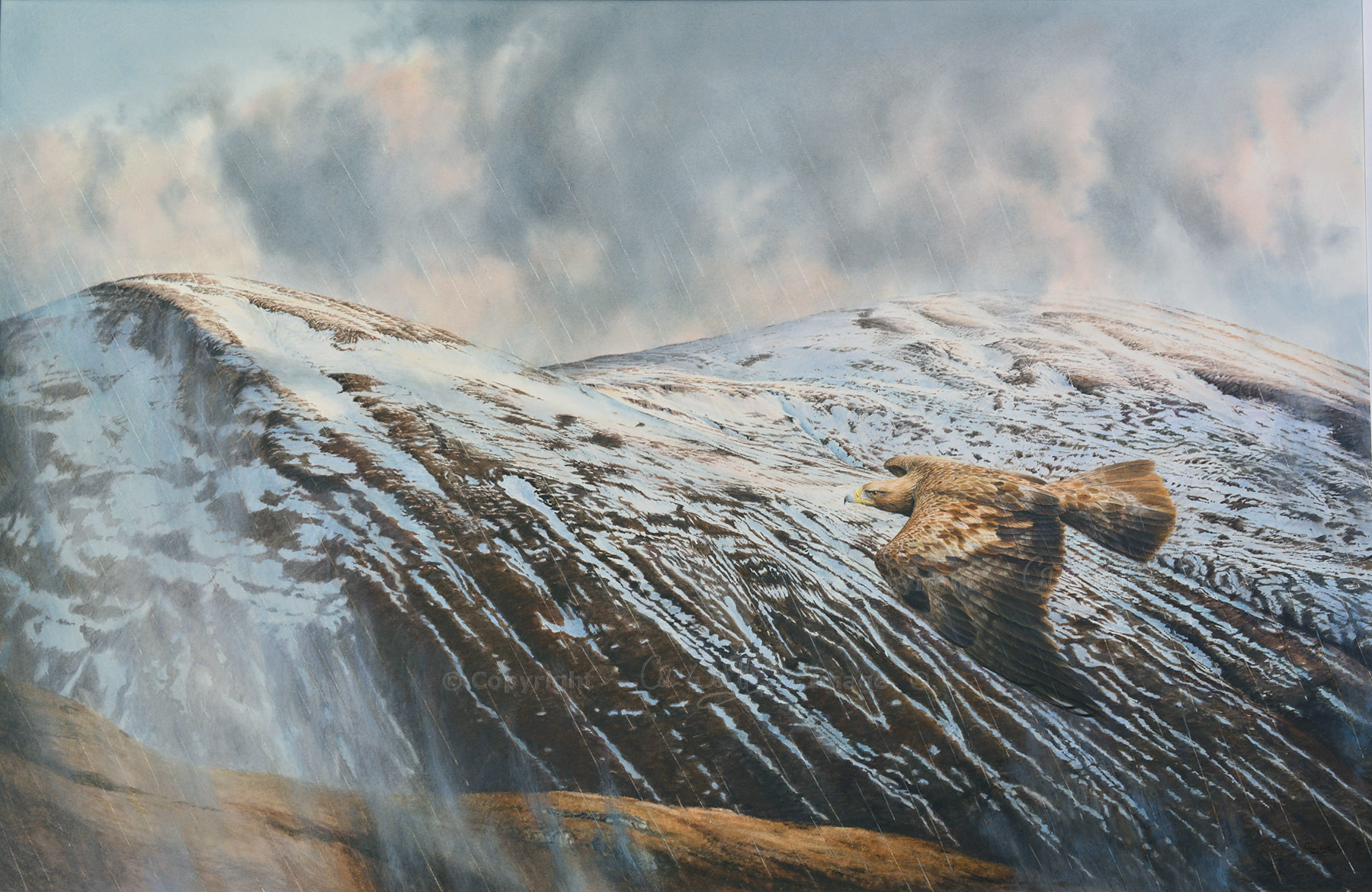 Golden eagle by Colin Woolf (5)