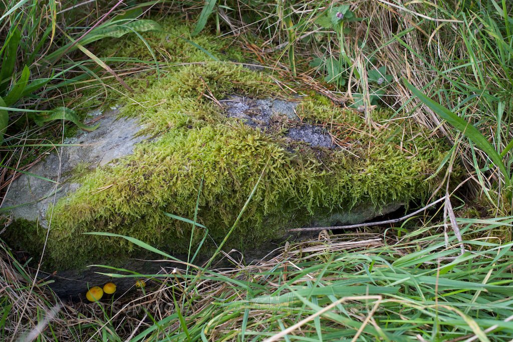 Grave Etive and Orchy - Colin 57