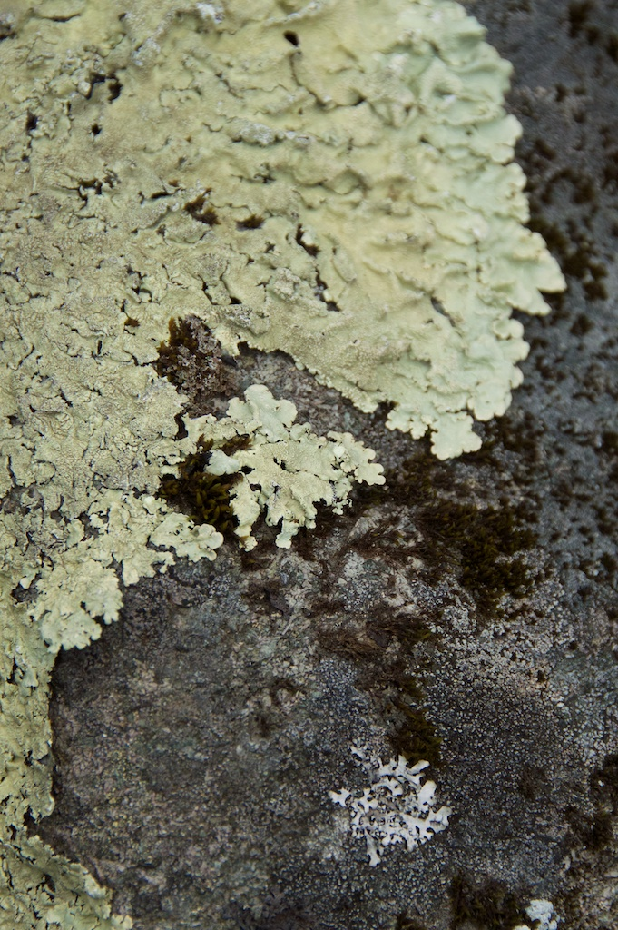 Dunadd - lichen