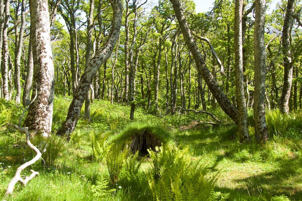 Taynish woods