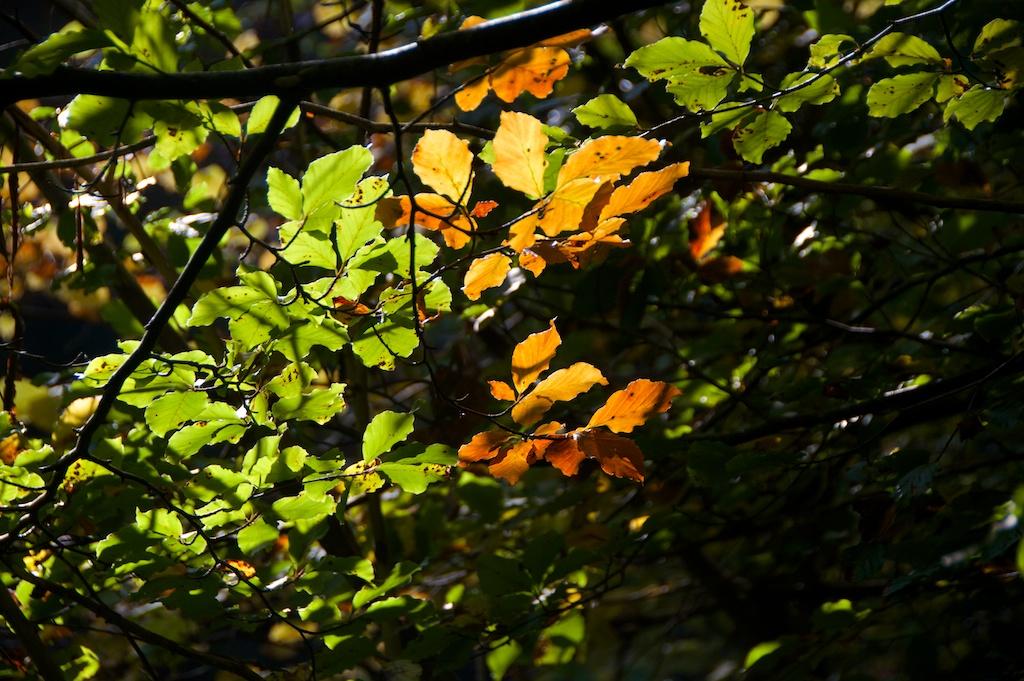 Killiecrankie autumn (26)