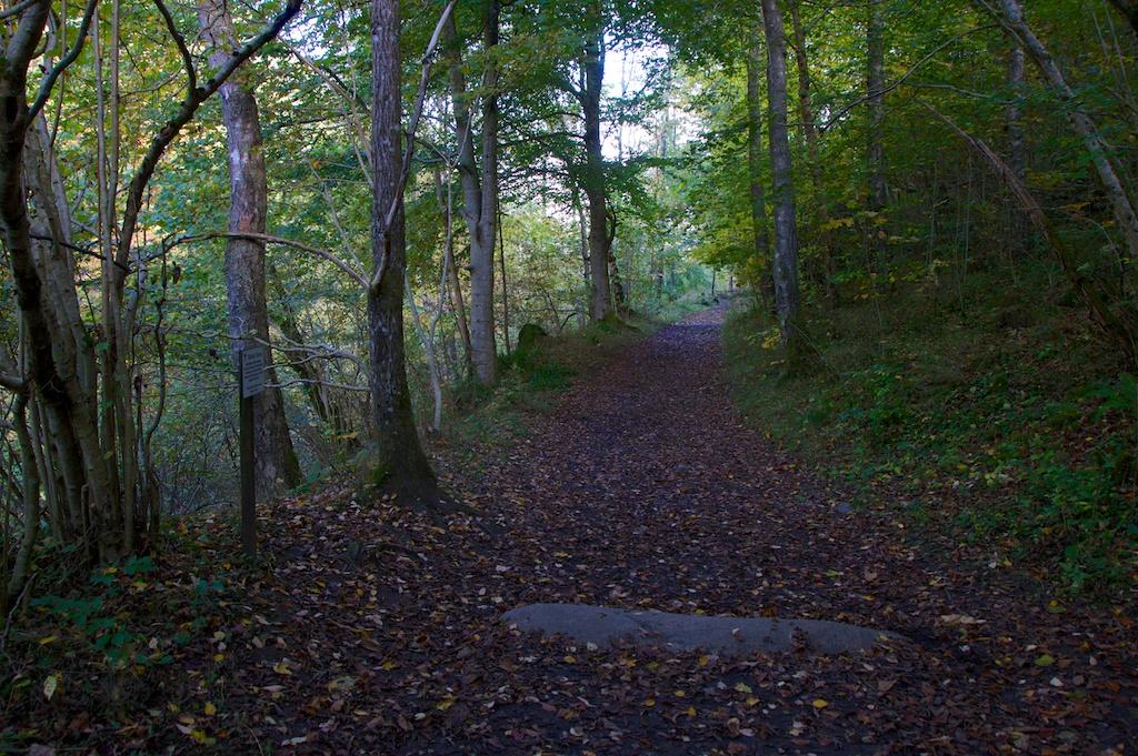 Killiecrankie Autumn 176