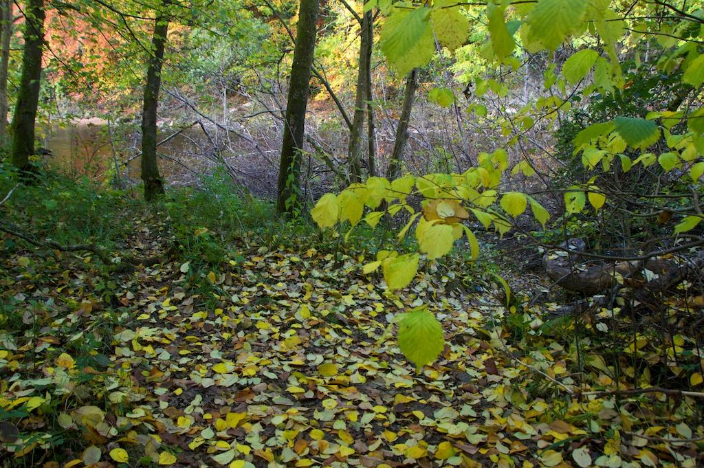 Killiecrankie autumn (7)