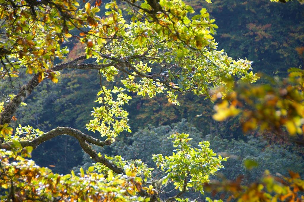 Killiecrankie autumn (31)
