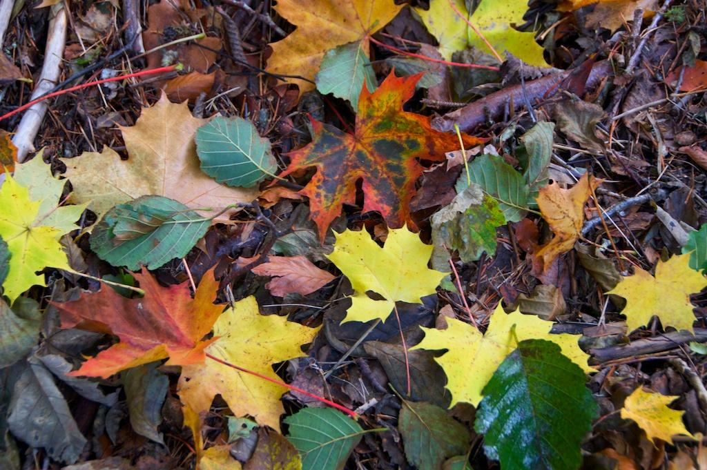Killiecrankie autumn (4)