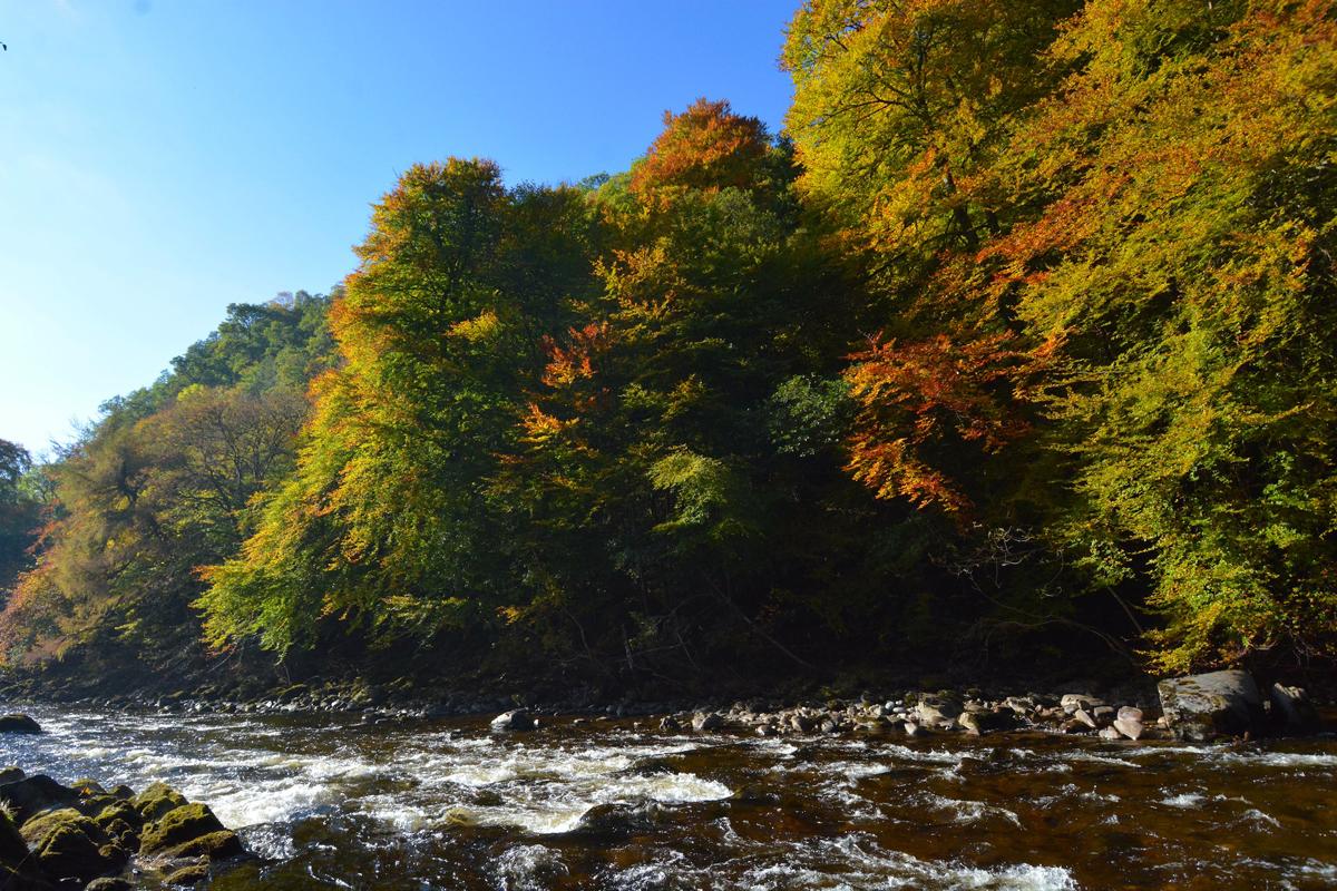 Killiecrankie autumn (1)