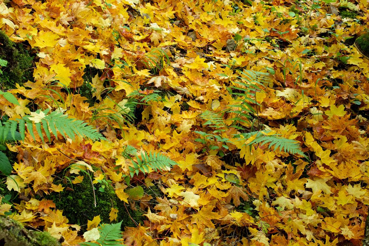 Killiecrankie autumn (22)