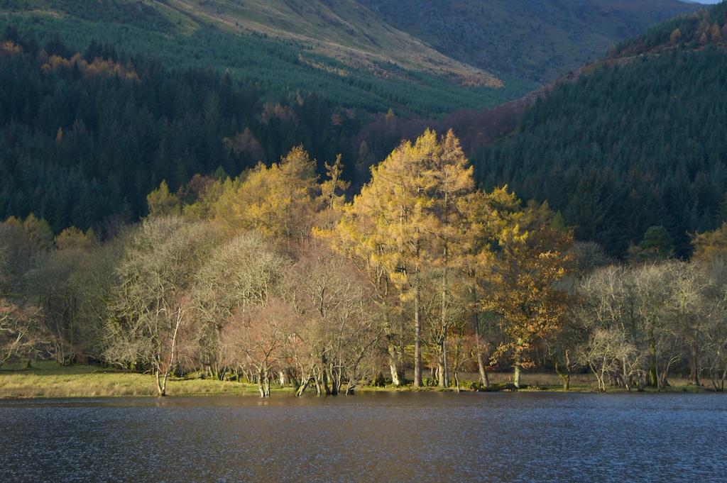 Trees by Loch Lubnaig