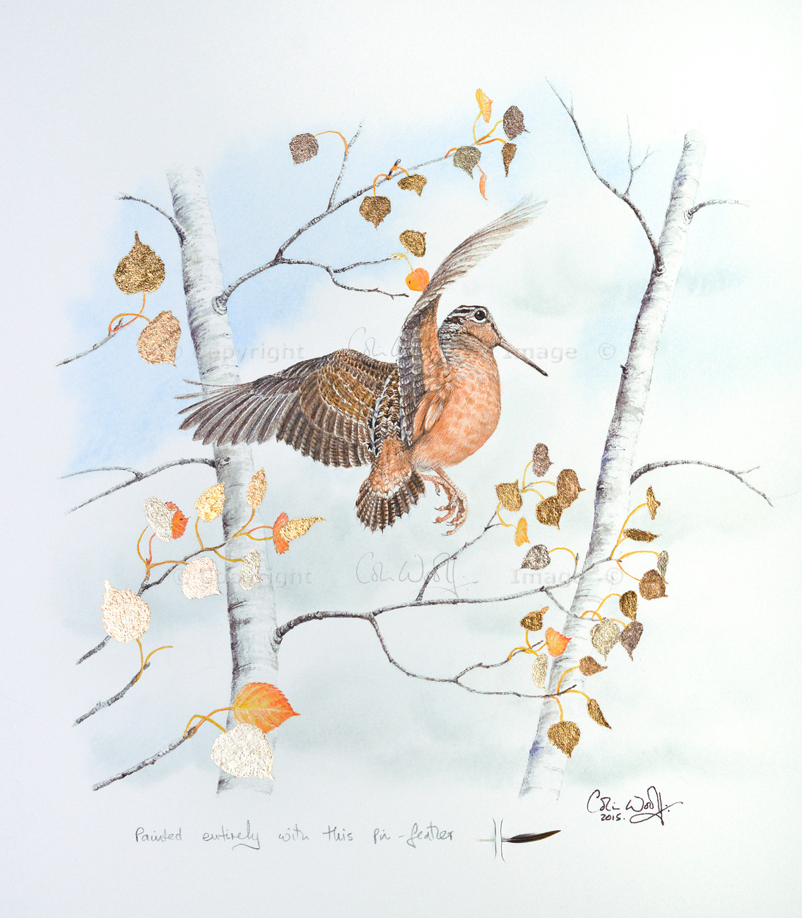 American Woodcock pin-feather