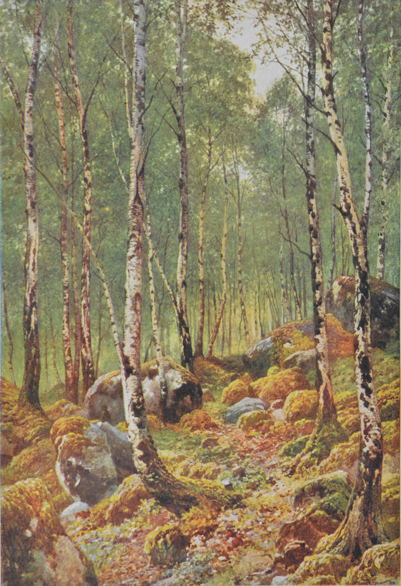 'A birch wood in spring-time by Loch Maree, Ross-shire'
