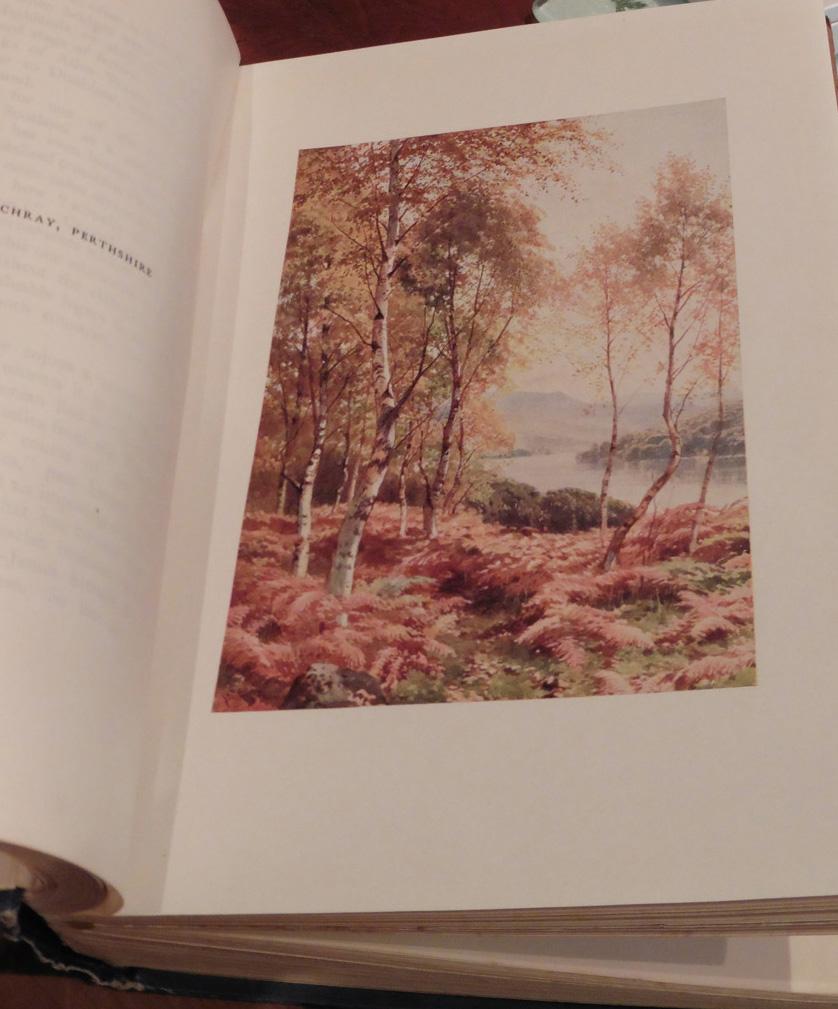 Bonnie Scotland - Birches by Loch Achray (2)
