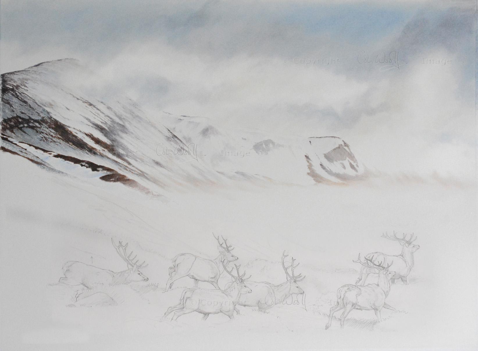 Red Deer hillside unf-s