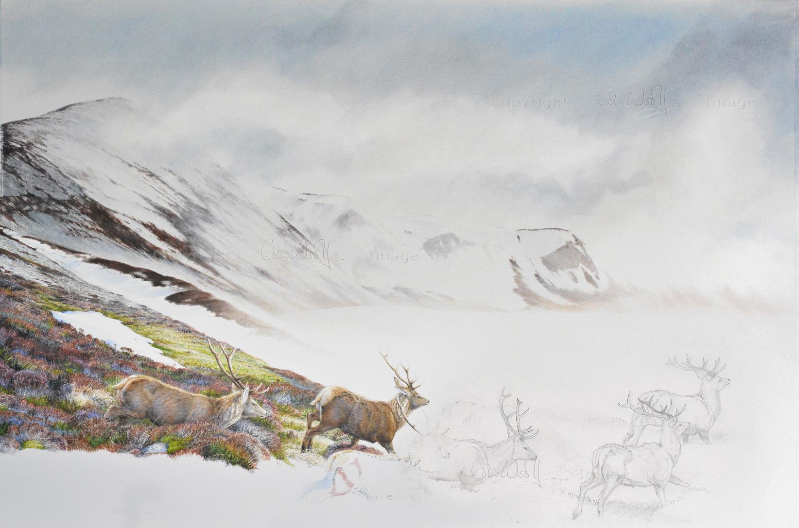 Red Deer hillside unf1-ws