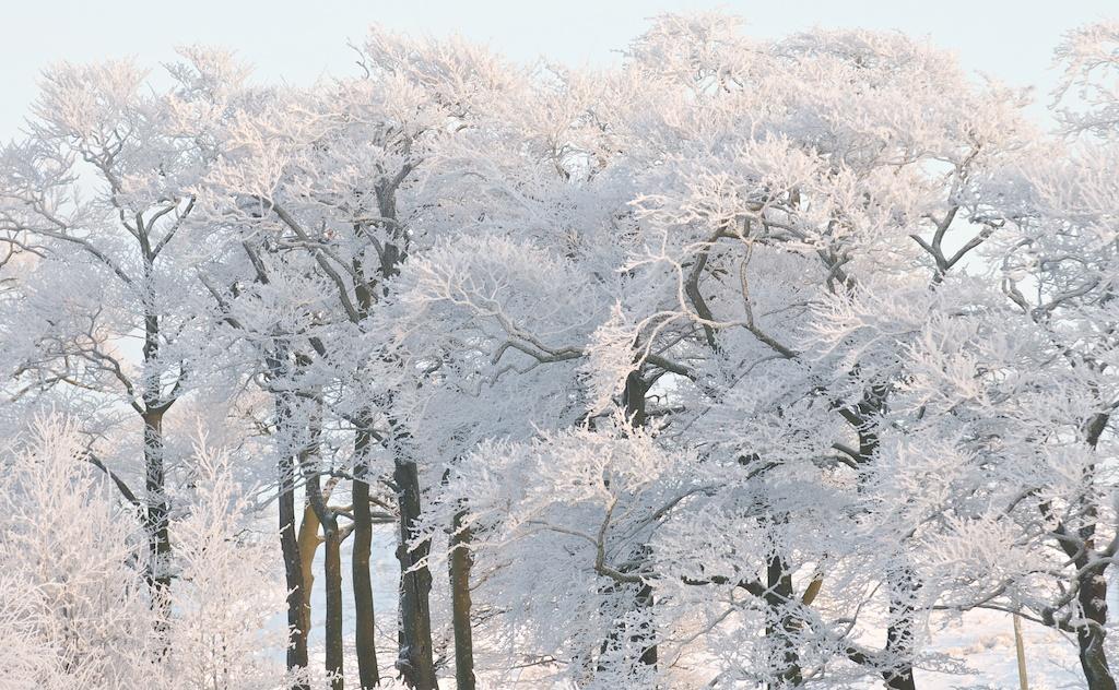 Snow 76
